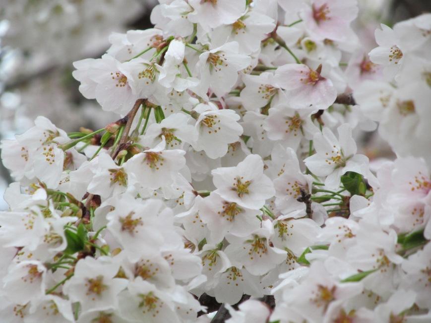 flowers 022